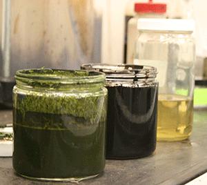 Ultraefficient Algae-to-Biocrude Conversion Process Advances to Pilot Scale