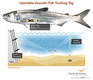 Catch and Release - New Injectable Tags Improve Fish Safety, Data Reliability