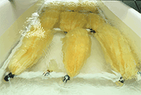 Seawater yields first grams of yellowcake