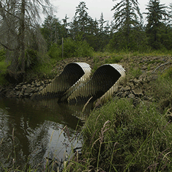 In rural southwest Washington state, new culverts replace a tide gate and reconnect a wetland to the Grays River and Columbia River estuary.