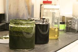 Algae slurry, biocrude oil, and refined biocrude