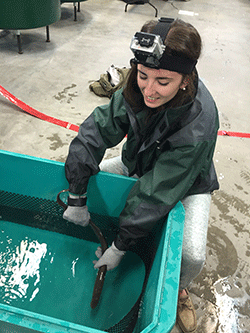 PNNL Tests Fish Immobilization Gloves